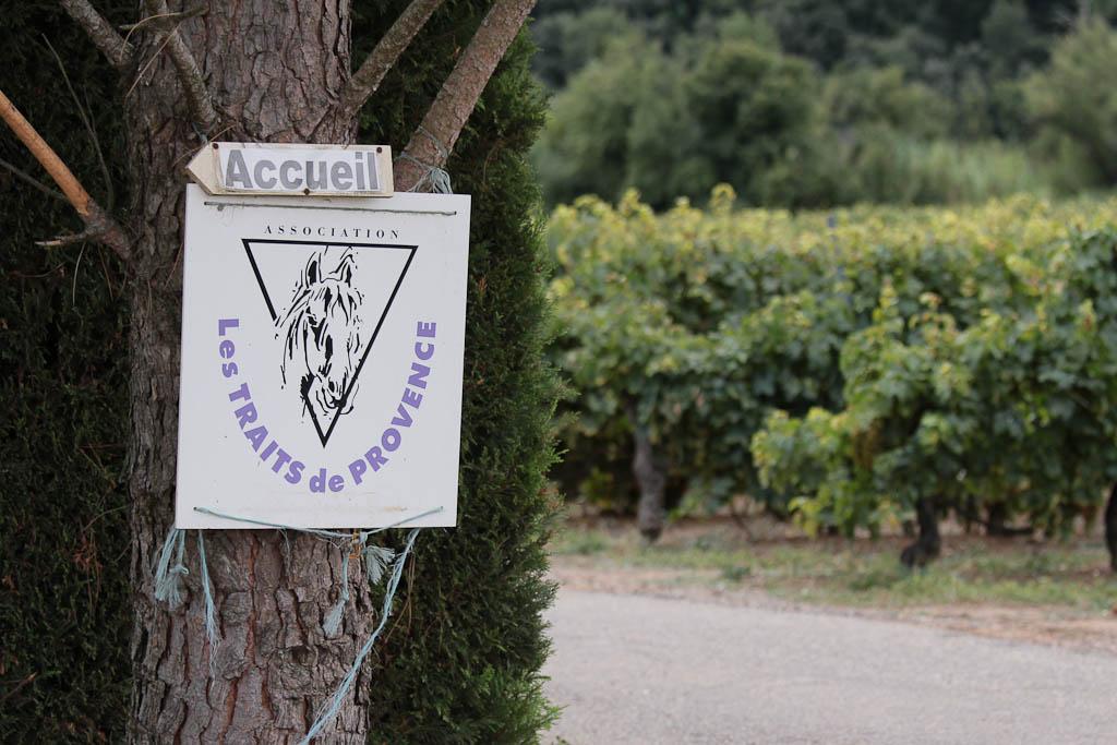 Journ e du cheval 2011 chez les traits de provence - Journee des associations salon de provence ...